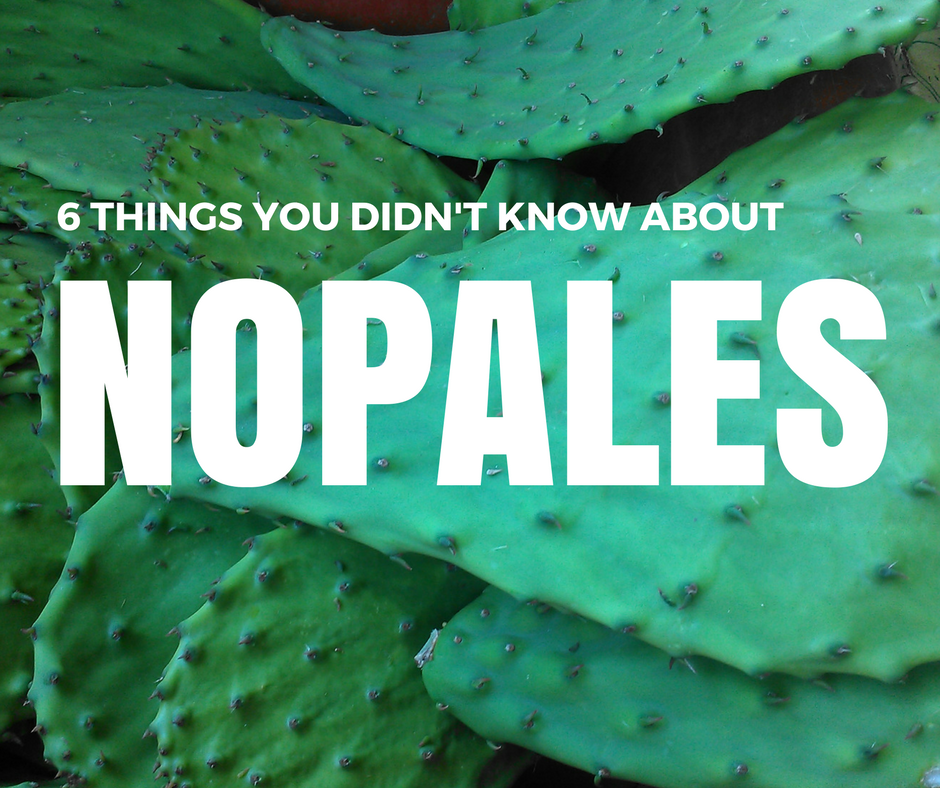 Six Things You Didn't Know About Nopales – Like What They Are - Food Literacy Center